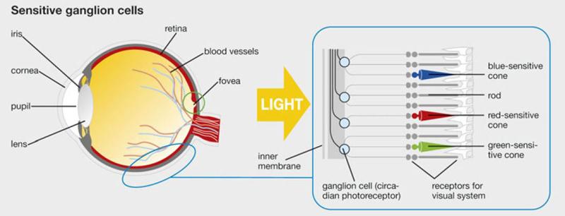 licht_wissen_how_body_measures_light_s
