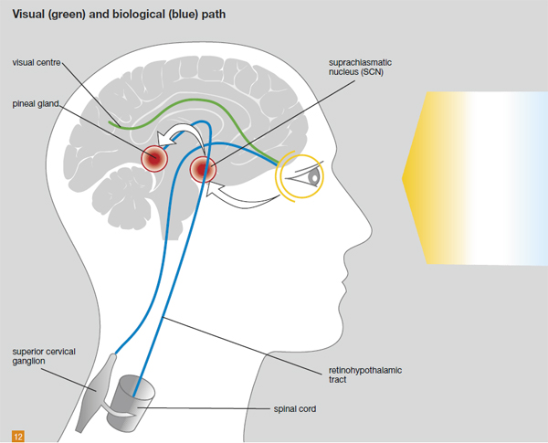 light and health are linked as light synchronizes our circadian rhythms via our SCN