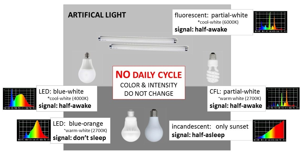 the spectrum of LED, fluorescent and incandescent lights does not change with the time of day
